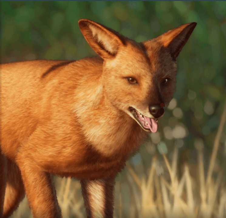 Planet Zoo Southeast Asia Animal Pack Cuon